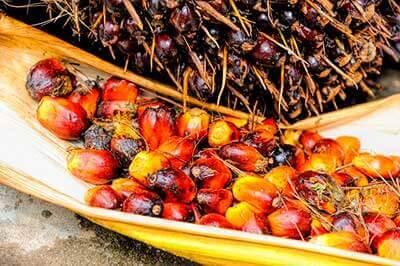 el aceite de palma y sus efectos en la salud